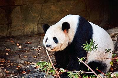 2-Day Washington D.C. and National Zoo Summer Tour W/ Panda Cubs