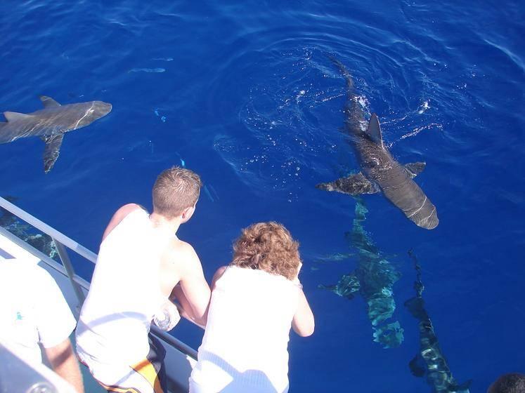 North Shore Shark Adventure Boat Tour