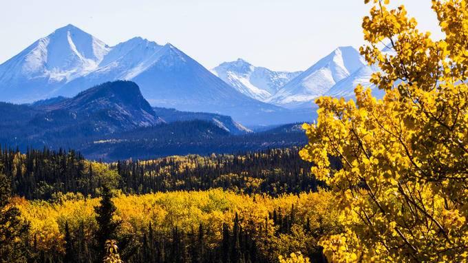 Denali National Park to Fairbanks Shuttle (Oneway/Roundtrip)