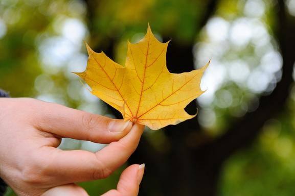 5-Day Agawa Canyon Railway & Algonquin Park Fall Foliage Tour from Toronto