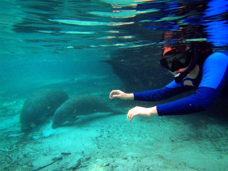 Swim with the Manatees Sealife Tour