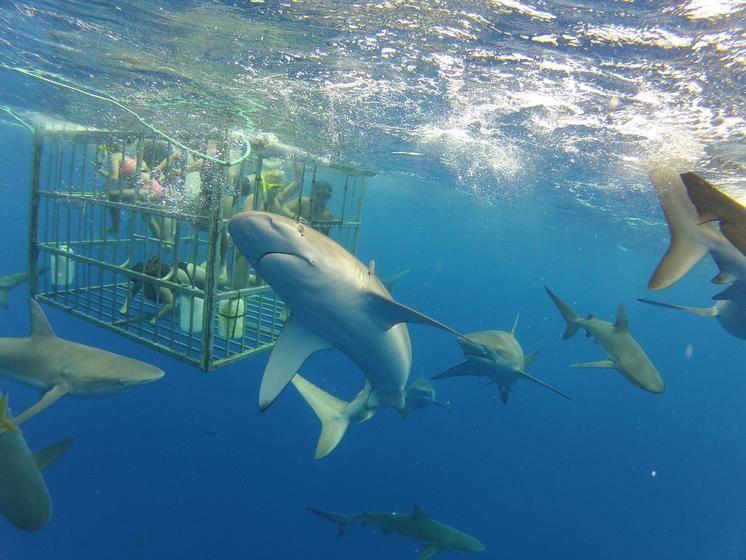 North Shore Shark Cage Adventure Tour