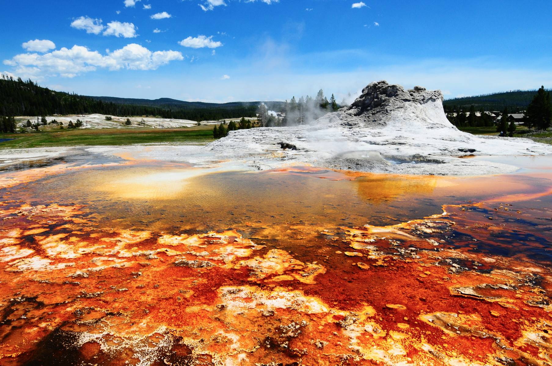 Yellowstone  Day Tour