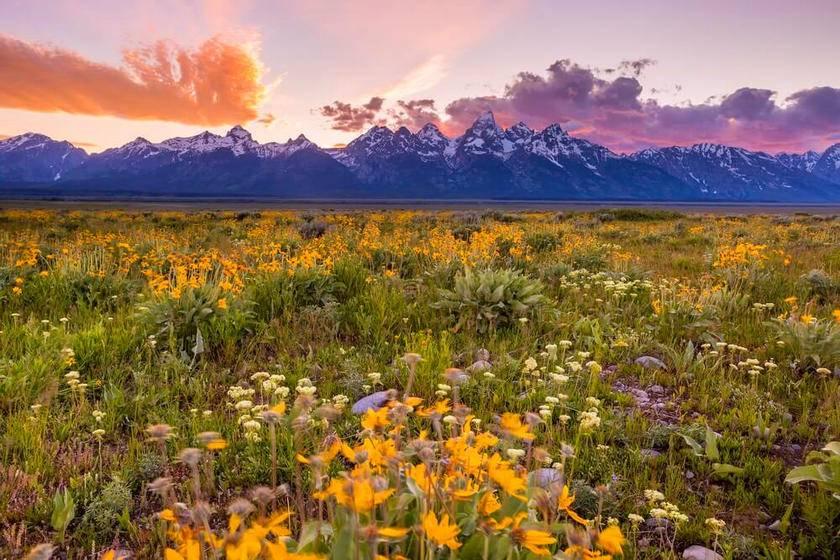 7-Day Yellowstone, Las Vegas, Grand Canyon West, & California Theme Park Premium Tour