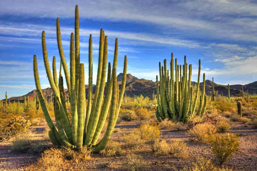 4-Day New Mexico and Arizona Tour