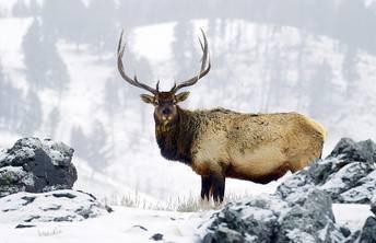 11-Day West Coast Winter Tour From San Francisco: Yellowstone, Grand Canyon, Jackson, & Antelope Canyon
