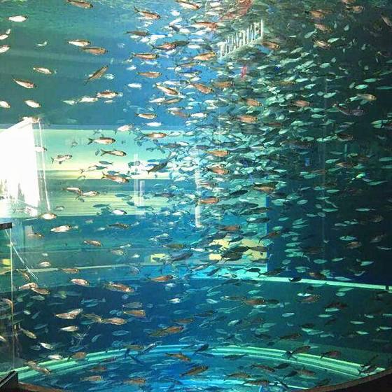 Ripley's Aquarium of Canada (Admission Ticket)
