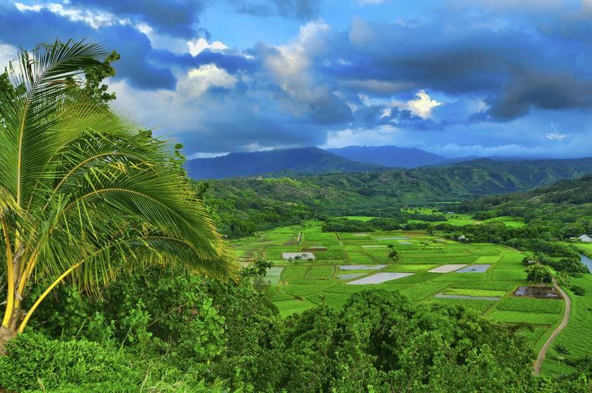 Hawaii Movie Tours on Kauai