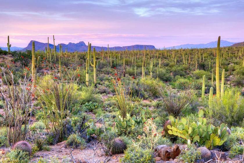 3-Day Arizona Sunshine Tour