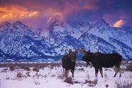 5-Day Yellowstone Winter Tour From Salt Lake City: Jackson, Grand Teton, and Snow King Mountain