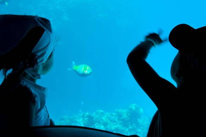 Hawaii Glass Bottom Boat Tours
