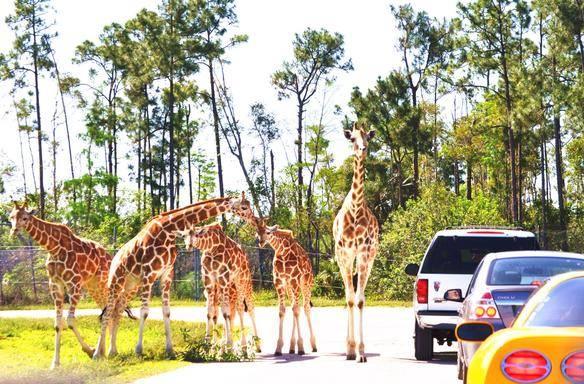 9-Day Miami, Atlanta and Orlando Theme Park Tour from Miami
