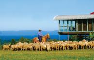 Aussie Farm, Food & Wine Tour From Sydney