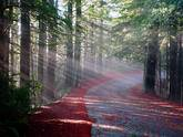 Muir Woods & Sonoma Wine Country Tour**With 3 Tastings**