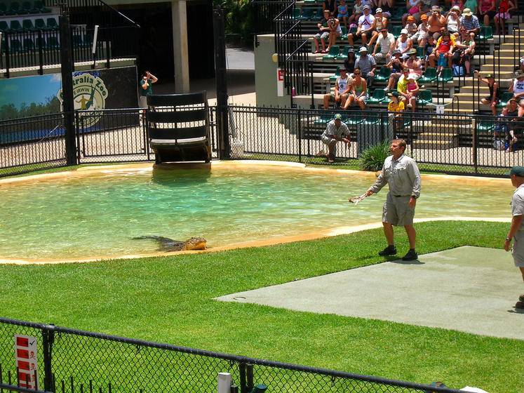 Croc Express to Australia Zoo From Gold Coast