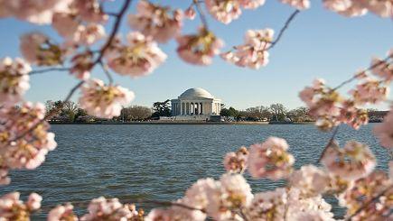 3-Day Washington, D.C Cherry Blossom Tour: Longwood Gardens, Mystic Aquarium