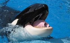 europe trip honeymoon package:3-Day SeaWorld, Busch Gardens & Aquatica Theme Park Tour Package From Miami