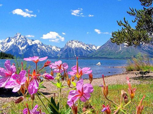 4-Day Yellowstone & Grand Teton Tour from SLC