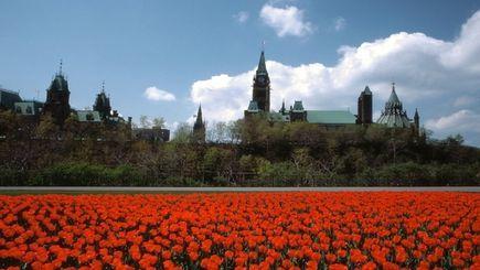 3-Day Ottawa Tulip Festival Tour from New York