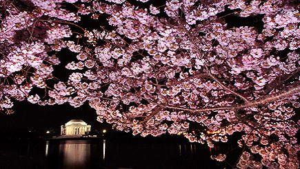 3-Day Washington, D.C Cherry Blossom Tour: Longwood Gardens, Mystic Aquarium