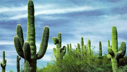 7-Day London Bridge, Phoenix, Saguaro, Tucson, White Sands, Carlsbad Caverns Tour