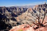 Grand Canyon West Rim Tour with Lunch (Upgrade Options)