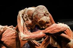 marvel avengers exhibition:The Original Exhibition to Body Worlds: Pulse Ticket