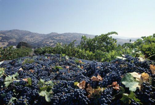 Wine Country Special Tour for Wine Lovers
