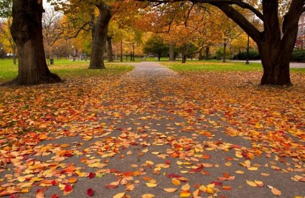 Classic Fall Foliage