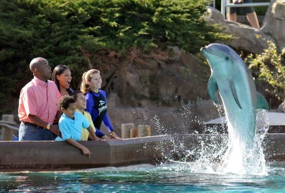 1-Day San Diego - SeaWorld Tour