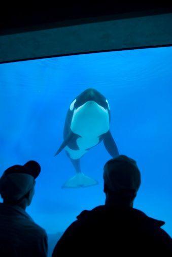 1-Day San Diego - SeaWorld Tour
