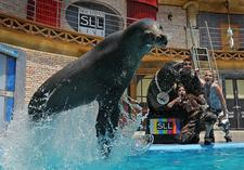 1 day trip boston:SeaWorld of San Diego Day Tour