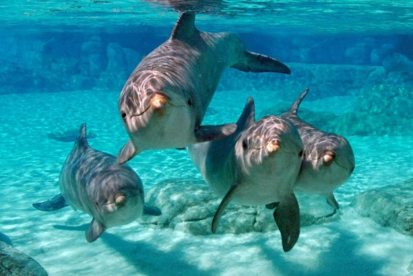 4-Day California Theme Parks Package Tour: 3 Choices of 8 Options