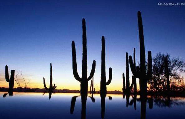 7-Day London Bridge, Phoenix, Saguaro, Tucson, White Sands Tour