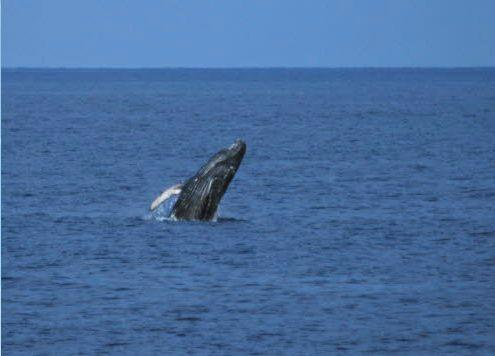 Hawaii's Best Whale Watch Tour - Wake Up With the Whales