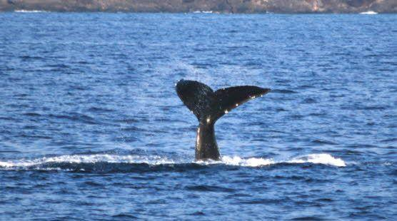 Hawaii's Best Whale Watch Tour - Signature Whale Watch