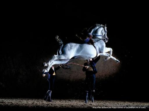 Jerez and Cadiz Day Trip from Seville | Royal Andalusian School of Equestrian Art