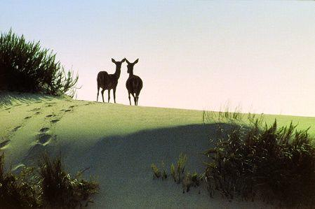 Full-Day Tour of Doñana National Park
