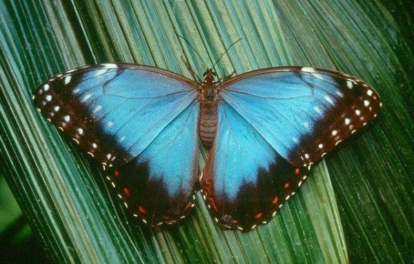 Audubon Butterfly Garden and Insectarium