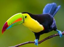 indian tours to see east coast usa:Cruising Costa Rica & Panama With Tortuguero National Park & Panama's Pacific Coast