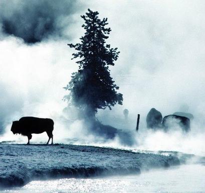 10-Day Yellowstone, Mt. Rushmore, Grand Canyon, Grand Teton and Las Vegas Tour