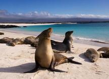 west coast of america:Ultimate South America With Galapagos Cruise