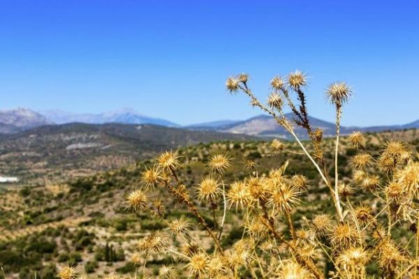 The Greek Legacy: Mycenae and Epidaurus