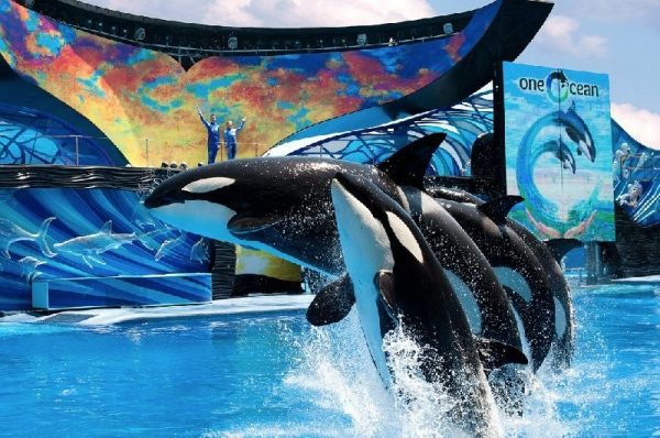 package tour england:4-Day SeaWorld & Busch Gardens Tour Package with Airport Transfers