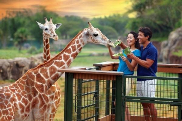 5-Day Orlando Theme Park Tour: Universal Studios, Islands of Adventure and SeaWorld