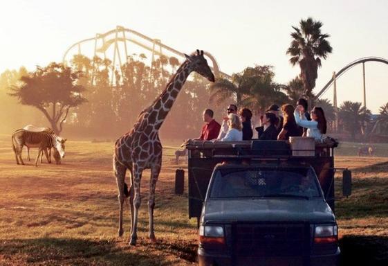 8-Day Orlando Theme Park Tour: Universal, Disney, SeaWorld and Busch Gardens