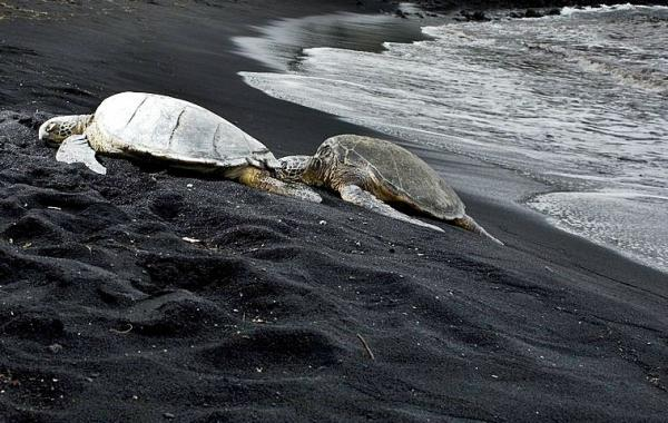 7-Day Big Island and Oahu Tour: Volcanoes NP - Punalu'u Black Sand Beach - Pearl Harbor