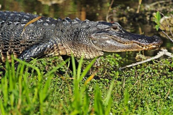 13-Day Miami Sunshine Tour: Everglades, Miami, Key West + 7 Theme Parks