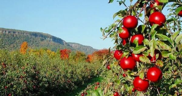 1-Day Hudson River Valley Apple Picking with Brotherhood Winery Tour