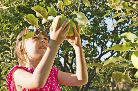 1-Day Hudson River Valley Apple Picking